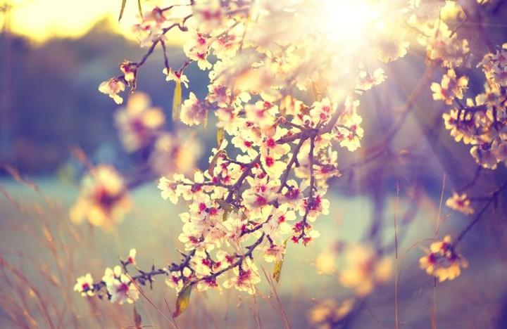 Jaro, vítej...  1