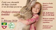 Prodejní výstava králíků 1
